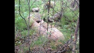 Находка в лесу ,что это?
