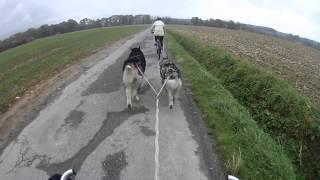 preview picture of video 'Sortie complète en cani-VTT Malamutes d'Alaska (40 min)'