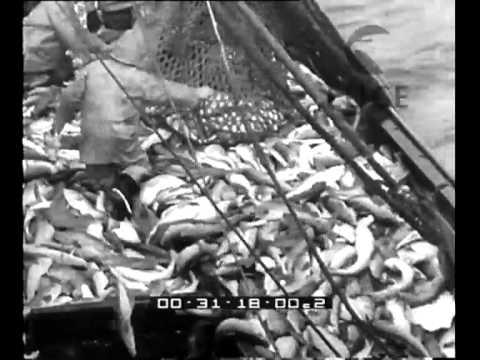 Avanti giorni liberi su pesca
