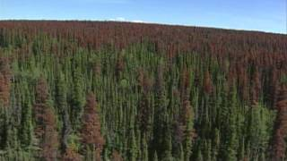 Forestry in Canada: Climate Change and Adaptive Capacity - Mark Johnston