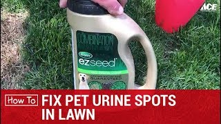 How To Fix Pet Urine Spots On Lawn - Ace Hardware