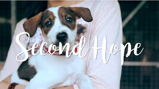 Second Hope | documentary of Singapore street dogs
