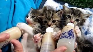 Котики, ну просто котики