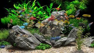 Dream Aquarium - 2 Hours - 8 Tanks (4K)