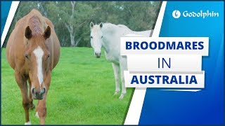 A year in the life of our broodmares, how they create our champions on the racetrack