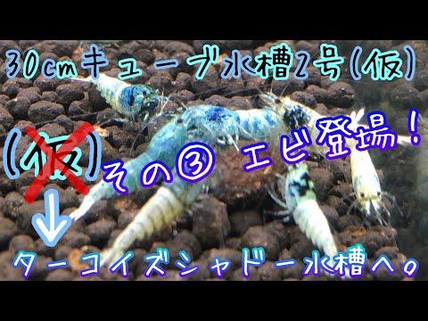 【アクアリウム】30キューブ水槽2号(仮)生体導入編 〜(仮)からターコイズシャドー水槽へ〜