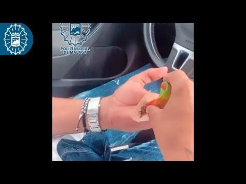 Cazado en Málaga conduciendo con una rodilla mientras se lía un porro