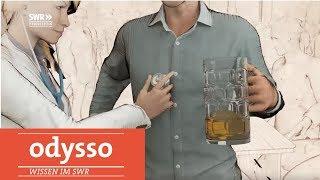 Gambar cover Wie sich der Körper vom Alkohol erholt  | Odysso