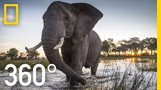 Elephant Encounter in 360 Ep. 2 | The Okavango Experience