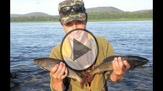 Рыбалке река ангара
