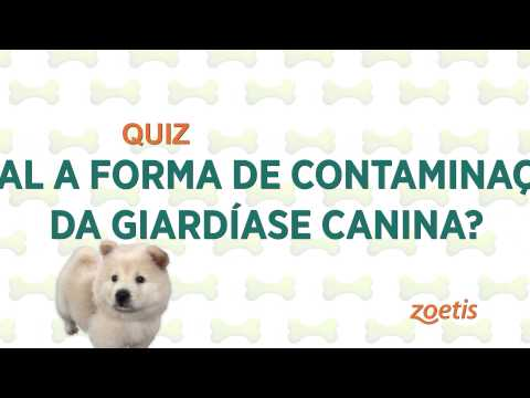 Giardia jelitowa objawy