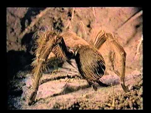 ragadozók és paraziták