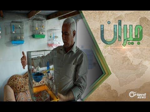 العرب اليوم - بالفيديو: تعرّف على طه النجار وعشقة لتربية الطيور المنزلية