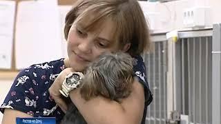 Собакам и кошкам тоже нужна кровь: в мире ростовских животных есть свои доноры