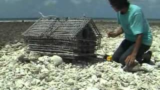 preview picture of video 'Kiribati - Glimpses of North Tarawa Atoll'