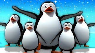 5 Chú Chim Cánh Cụt Nhỏ   Vần Điệu Trẻ   Bài Hát Trẻ Em   Five Little Penguins   Kids Tv Vietnam