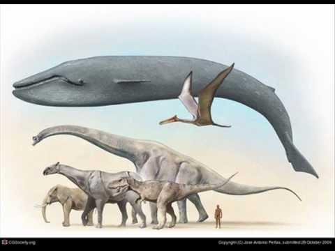 Blue Whale. The Biggest Animal In The World Mp3