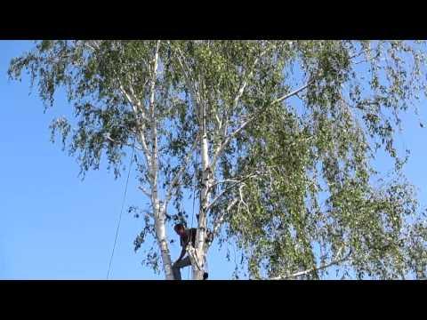 Семья Бровченко. Спил дерева по частям возле проводов, над забором (~20м. высота).
