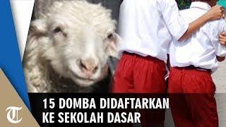 Seorang Peternak Daftarkan 15 Dombanya ke Sekolah Dasar agar Sekolah Tak Ditutup