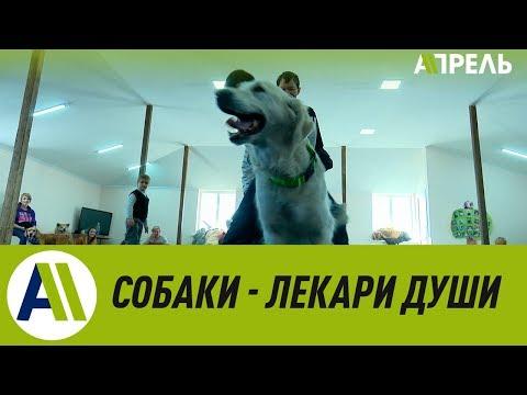 Канистерапия - лечение и реабилитация с помощью собак \\ Апрель ТВ