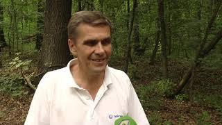 У Чугуївському районі вирубали понад 8000 кубів здорової деревини