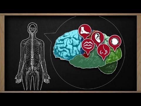 Esclerosis múltiple, enfermedad del sistema nervioso central