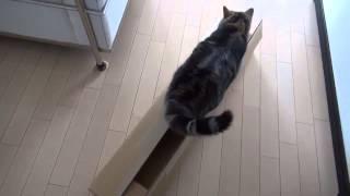 Кот не помещается в коробку.