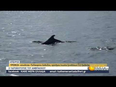 Δελφίνια, πουλιά και χελώνες βρίσκους καταφύγιο στον υδροβιότοπο του Αμβρακικού | 12/11/2020 | ΕΡΤ