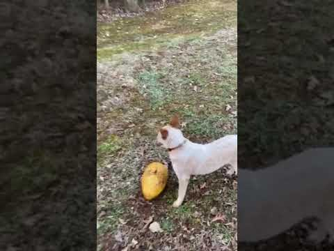 Video Of Four Paws Kingdom Campground & Dog Retreat, NC