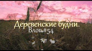 Деревенские будни. Влог#54. Почему мы не держим гусей. Сено. // Жизнь в деревне