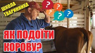 Як правильно доїти корову?