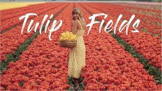 Tulip Fields in the Netherlands // Amsterdam travel vlog