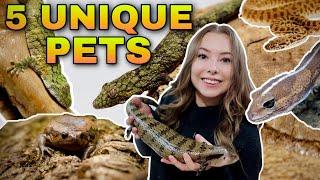 5 Unique Reptiles For BEGINNERS!