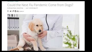 Чтение статьи Could the Next Flu Pandemic Come from Dogs