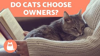 How Do CATS CHOOSE Their HUMAN? 🧍‍♀️🐈 Find Out!
