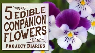 ★ 5 Edible Companion Flowers (Growing, Benefits & Serving Ideas)