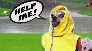 5 Ways Humans Annoy Their Dogs!