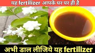 Organic fertilizer for Jasmine for more flower   मोगरा पर ज्यादा फूलों के लिये खाद