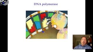 Conservation Biology - DNA Synthesis