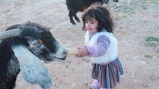 تحميل اغاني ???? ليلى مبسوطه مع الغنم / وعماد يلعب ! 莉莉喜歡和羊一起玩 MP3