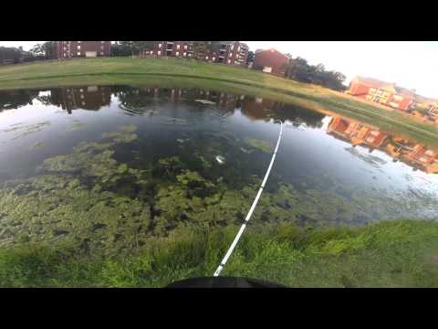 Texas Pond Fishing, Irving, TX