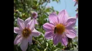omar khairat's flowers