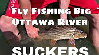Fly Fishing for Big Suckers on The Ottawa River!