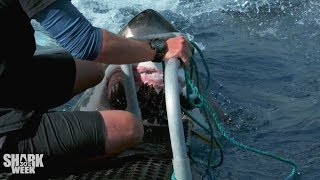 The Closest Calls | Shark Week's Most Intense Encounters