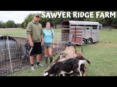 Welcome To Sawyer Ridge Farm