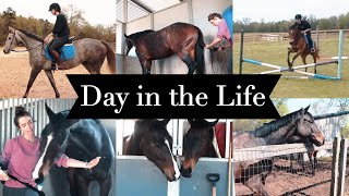 DAY IN THE LIFE: EQUESTRIAN COLLEGE STUDENT  // BARN VLOG #17