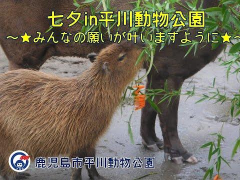 七夕in平川動物公園2021