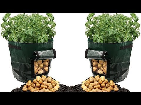 , title : 'Believe It Or Not, This Can Grow Tons Of Potatoes in a Trash Bag