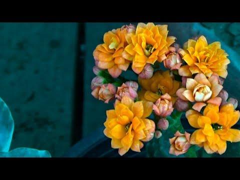 Lebadura halamang-singaw kuko sa paa