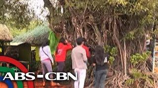 TV Patrol: Balete sa Ilocos Norte, puno ng pera
